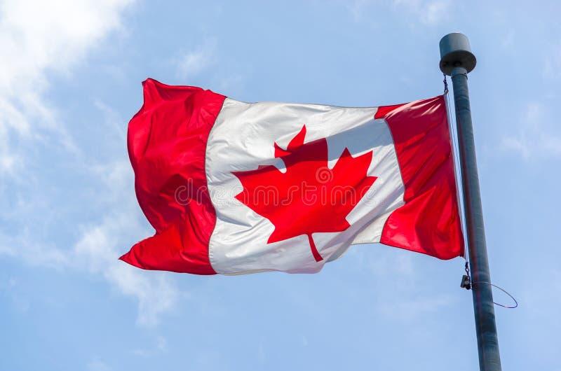 Bandeira canadense no vento sobre o céu azul imagem de stock royalty free