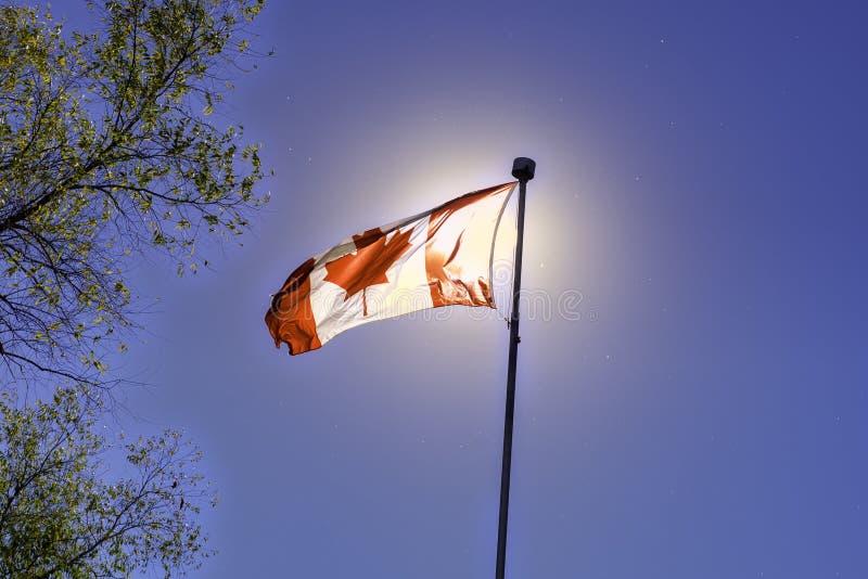 Bandeira canadense que acena contra o céu azul foto de stock royalty free