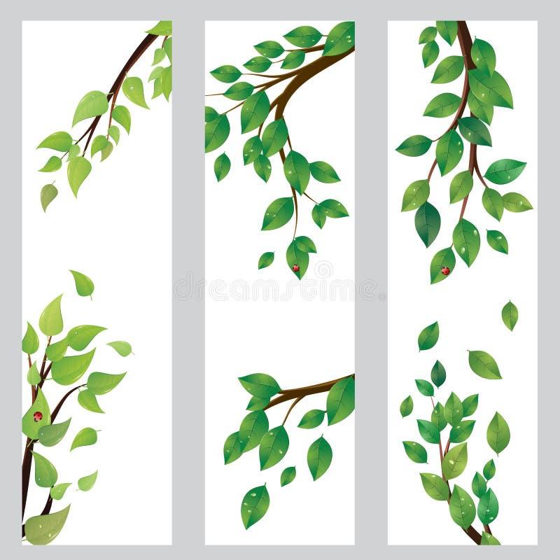 Bandeira com as folhas do verde no ramo ilustração do vetor