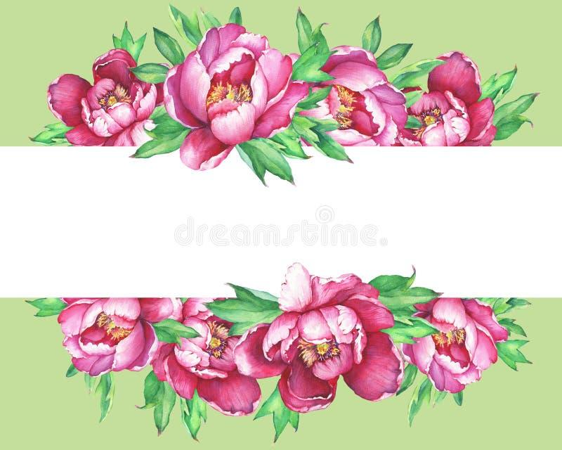Bandeira com florescência das peônias cor-de-rosa, isoladas no fundo verde ilustração royalty free