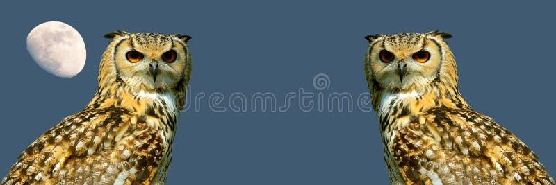Bandeira das corujas de Eagle fotografia de stock