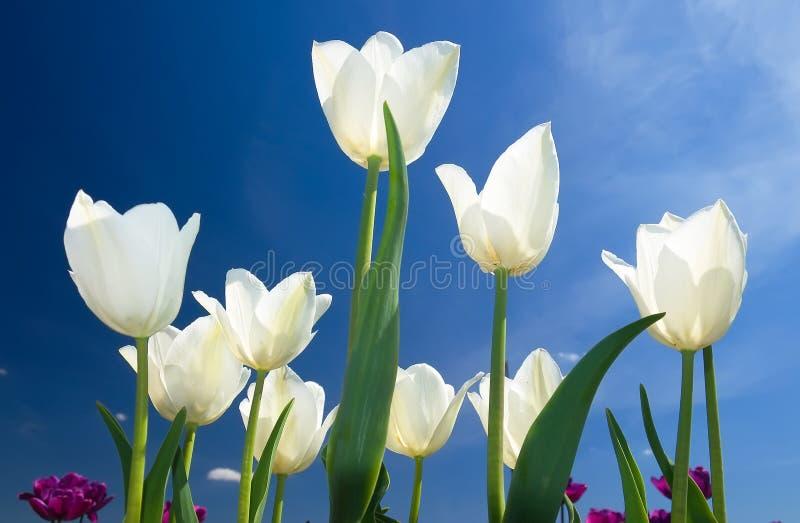 Bandeira das flores Background imagem de stock royalty free