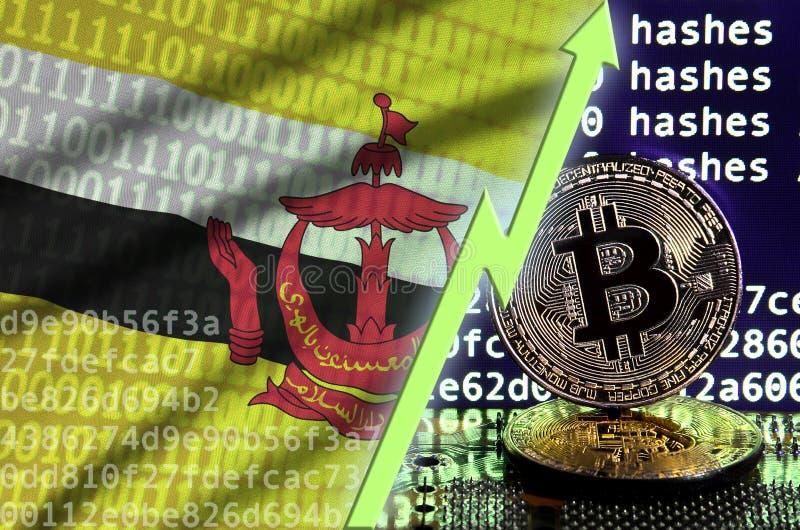 Bandeira de Brunei Darussalam Darussalam e seta verde de aumentação na tela de mineração do bitcoin e em dois bitcoins dourados f fotos de stock