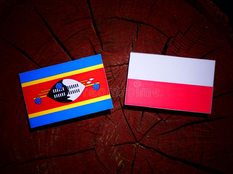 Bandeira de Suazilândia com bandeira polonesa em um coto de árvore isolado fotografia de stock