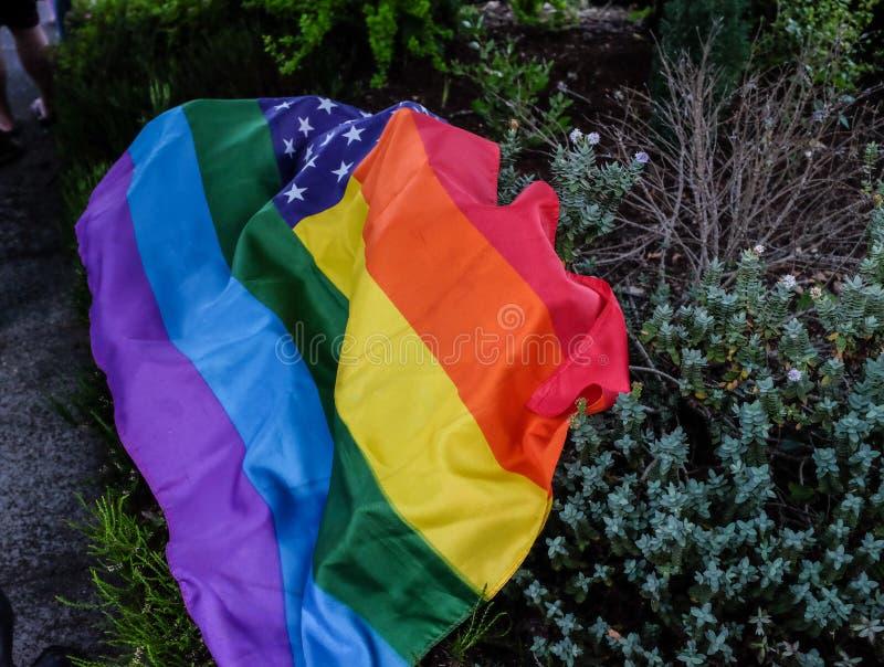 A bandeira do arco-íris com estrelas dos E.U. drapejou sobre um arbusto imagens de stock