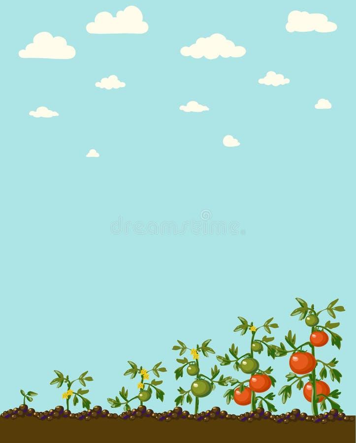 Bandeira do jardim do vintage com vegetarianos da raiz ilustração stock