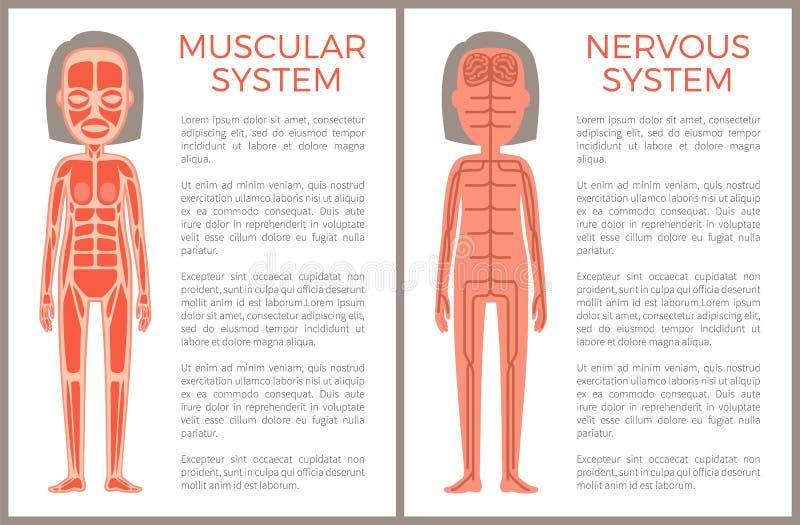 Bandeira do sistema muscular e nervoso Anotomical ilustração royalty free