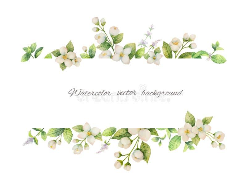 Bandeira do vetor da aquarela das flores jasmim e dos ramos da hortelã isolados no fundo branco ilustração stock