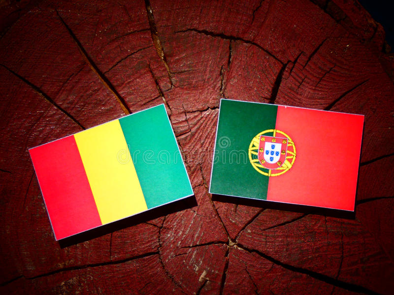 Bandeira guineense com bandeira portuguesa em um coto de árvore isolado fotos de stock