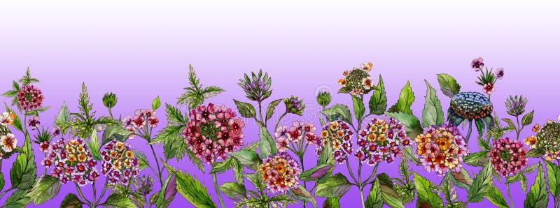 Bandeira larga do verão bonito O Lantana bonito floresce com as folhas verdes na luz - fundo roxo Molde horizontal ilustração stock