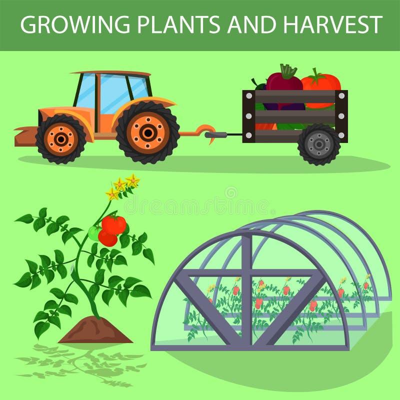 Bandeira lisa que rotula plantas e a colheita crescentes ilustração do vetor
