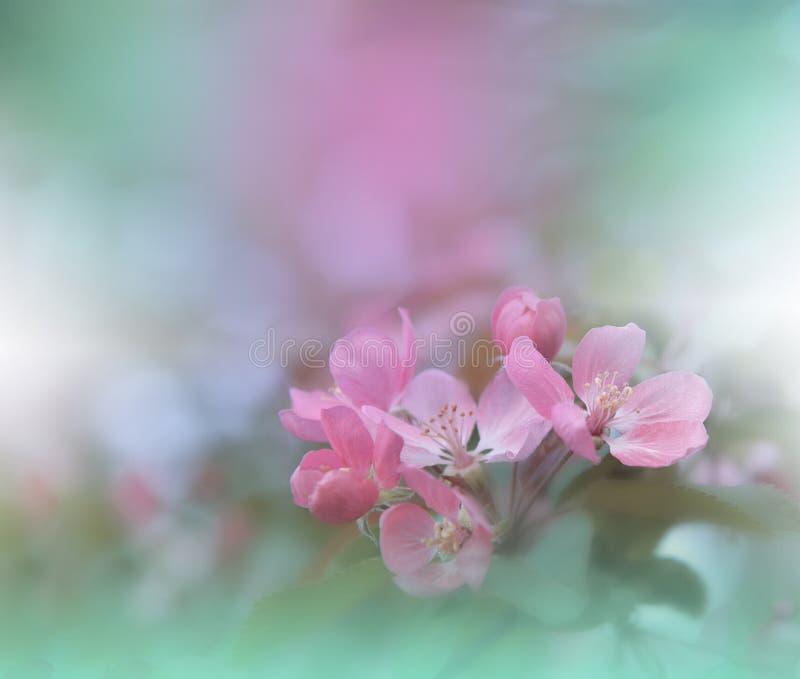 Bandeira ou encabeçamento do Web da flor da natureza da mola Foto macro abstrata Fundo artístico Projeto da fantasia Papel de par foto de stock royalty free