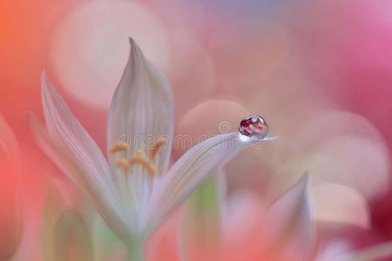 Bandeira ou encabeçamento do Web da flor da natureza da mola Foto macro abstrata Fundo artístico Projeto da fantasia Papel de par imagem de stock