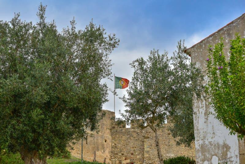 Bandeira portuguesa entre oliveiras imagem de stock royalty free