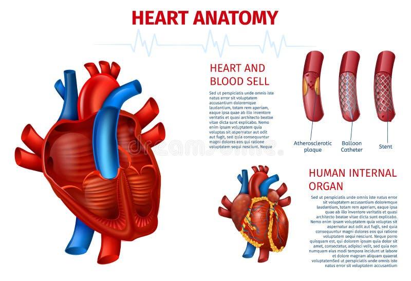 Bandeira realística do glóbulo humano da anatomia do coração ilustração royalty free