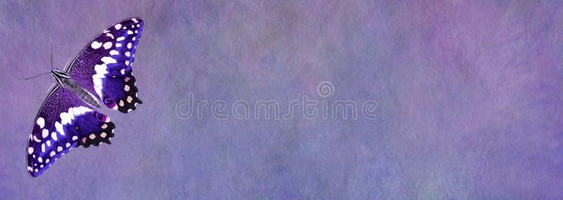 Bandeira roxa do quadro de mensagens da borboleta fotografia de stock