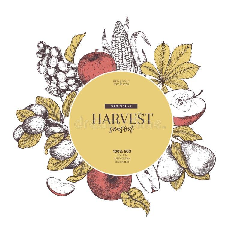 Bandeira tirada mão com frutas e legumes da colheita do outono Estilo gravado vintage do vetor Apple, uva, milho, ameixa e ilustração royalty free
