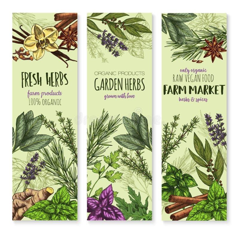 Bandeiras do esboço de Vecor das especiarias e das ervas ilustração stock
