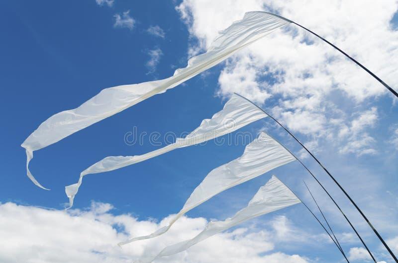 Bandeiras do papagaio foto de stock