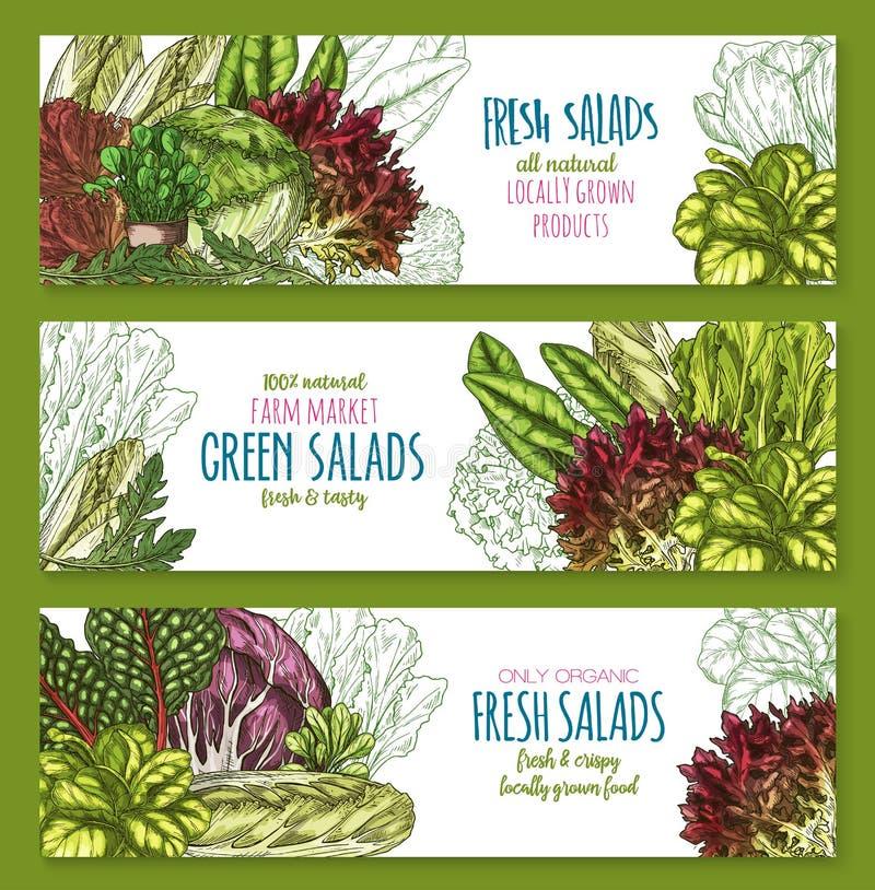 Bandeiras do vetor dos legumes com folhas das saladas ajustadas ilustração stock