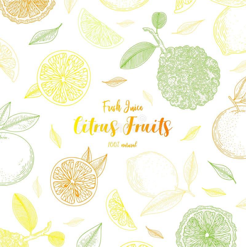 Bandeiras orgânicas dos citrinos Alimento saudável Estilo do vintage do esboço da gravura Alimento do vegetariano para o menu do  ilustração royalty free