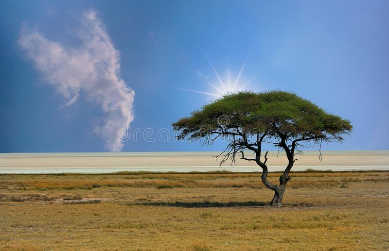 Bandeja com o sol que olha sobre a parte superior de uma árvore da acácia, Namíbia de Etosha fotos de stock royalty free