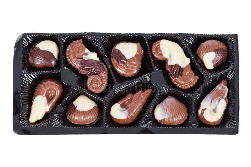 Bandeja de bombons belgas do chocolate de leite dados forma como conchas do mar com moluscos, cavalos marinhos imagem de stock