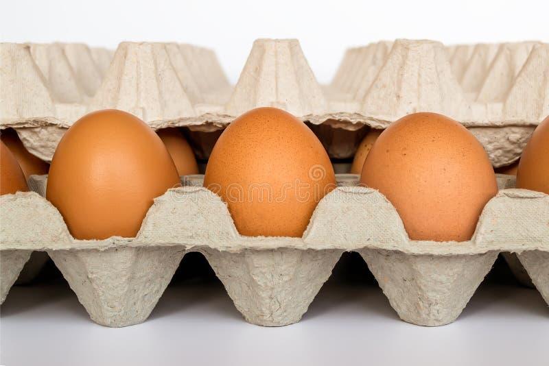Bandeja del papel del cartón con 30 huevos marrones del pollo, cierre para arriba en el fondo blanco Foco selectivo, vista delant imagen de archivo libre de regalías