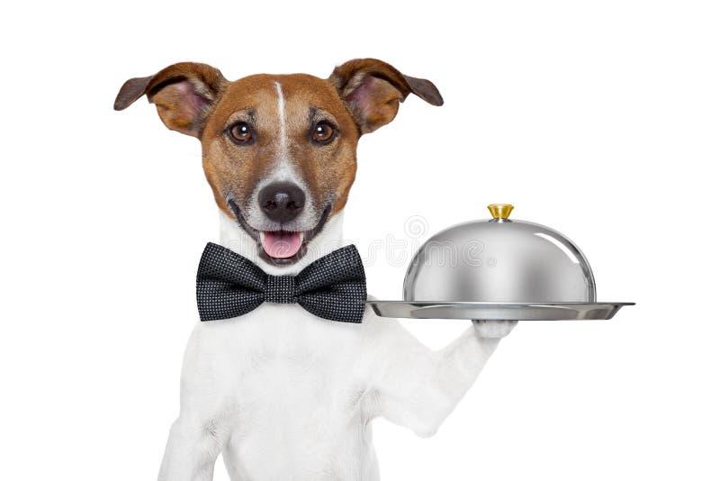 Bandeja del servicio del perro imagen de archivo libre de regalías