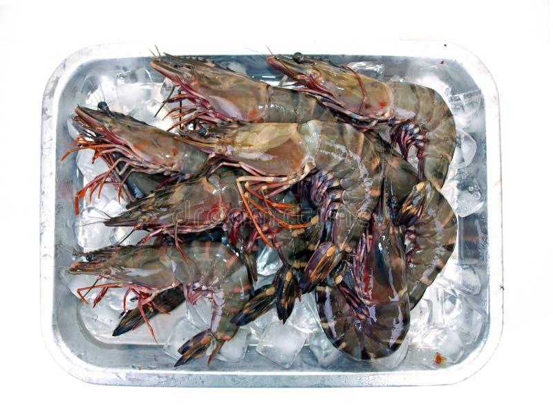 Bandeja grande seis dos camarões do tigre do mar foto de stock royalty free