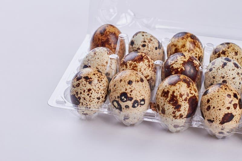 Bandeja plástica con los huevos de codornices fotografía de archivo
