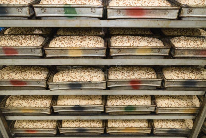 Bandejas de pão que esperam o forno fotos de stock