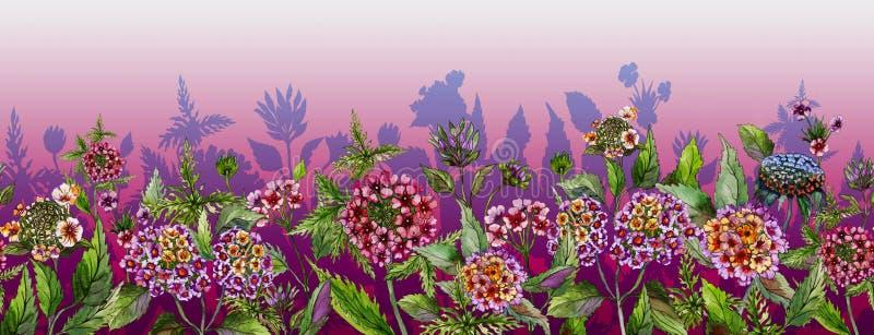 Bandera ancha del verano colorido El lantana hermoso florece con las hojas verdes en fondo rosado Plantilla horizontal ilustración del vector