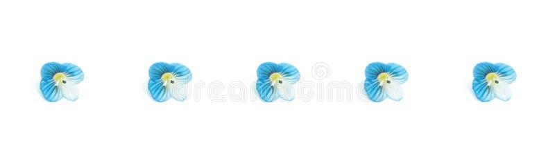 Bandera azul de las flores, flores azules aisladas en el fondo blanco Visi?n superior, endecha plana Modelo floral libre illustration