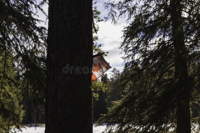 Bandera canadiense en Banff imagen de archivo