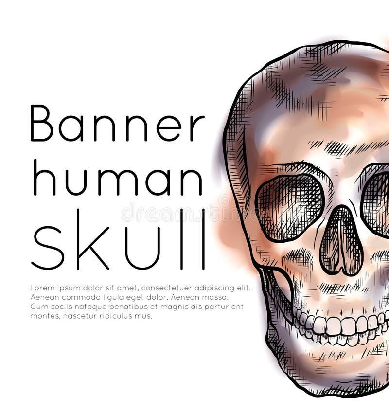 Bandera con el dibujo del cráneo humano con la trama, los movimientos del color de la acuarela y el lugar para el texto Front Vie libre illustration