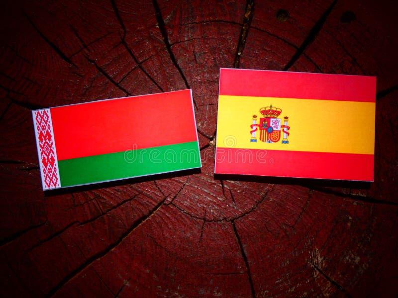Bandera de Bielorrusia con la bandera española en un tocón de árbol imágenes de archivo libres de regalías