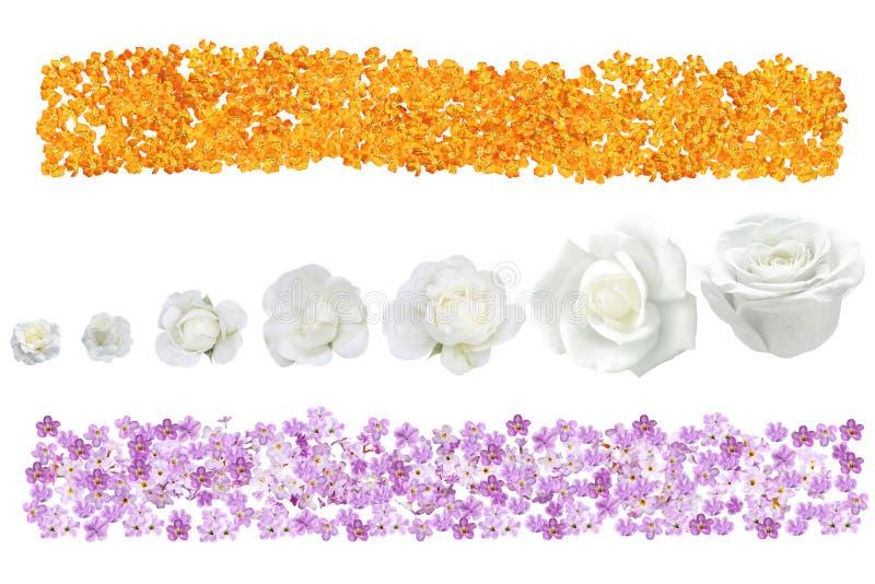 Bandera de la flor fotografía de archivo