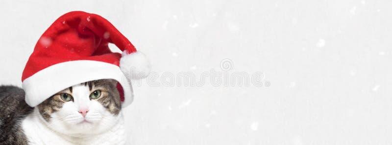 Bandera de la Navidad gato divertido en el sombrero de Santa Claus, con las escamas de la nieve en el fondo blanco foto de archivo libre de regalías