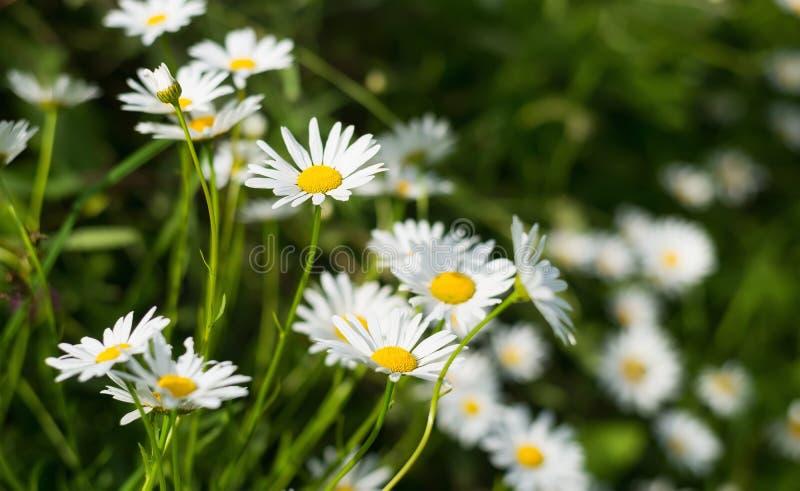 Bandera de las flores Background fotos de archivo libres de regalías