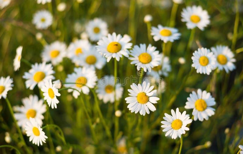 Bandera de las flores Background fotografía de archivo