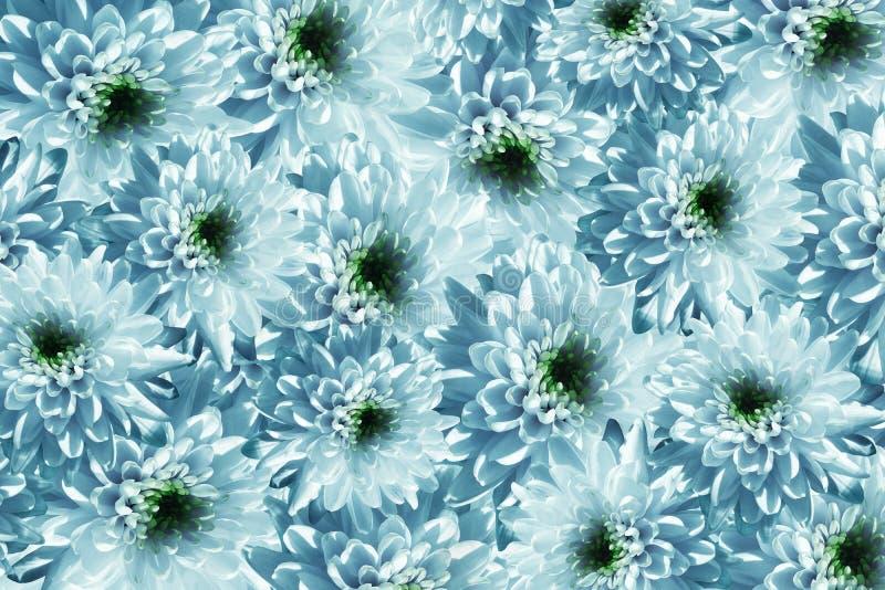 Bandera de las flores Background Florece crisantemos de la blanco-turquesa Mucho crisantemos con un centro verde collage floral F libre illustration