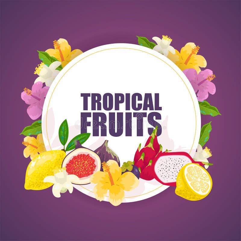Bandera de las frutas tropicales, ejemplo del vector del cartel Productos exóticos del verano tales como mangostán, mango, dragon ilustración del vector