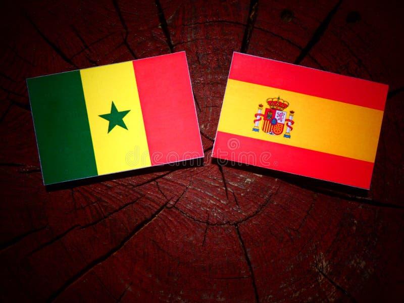 Bandera de Senegal con la bandera española en un tocón de árbol foto de archivo