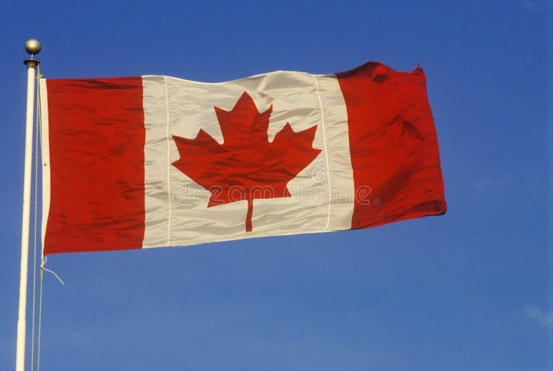 Bandera del canadiense de la hoja de arce fotografía de archivo