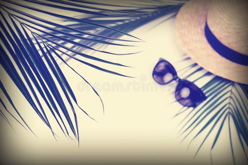 Bandera del fondo de la opinión superior del viaje del verano ramas tropicales de las hojas de palma, choza de la paja imagen de archivo libre de regalías