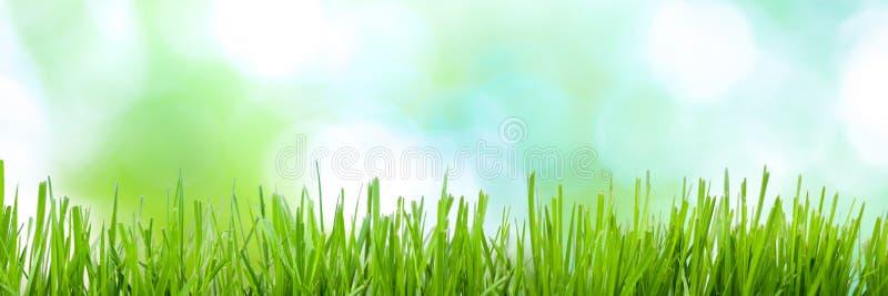Bandera del fondo de la primavera fotografía de archivo libre de regalías