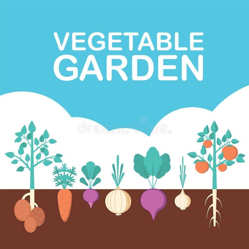 Bandera del huerto Comida orgánica y sana Cartel con veggies de la raíz stock de ilustración