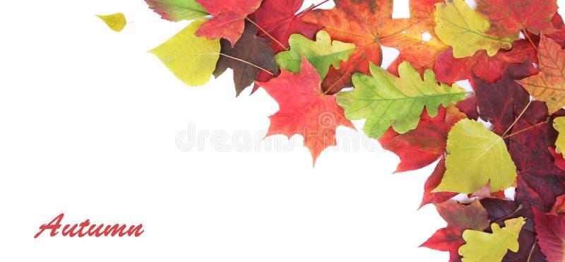 Bandera del otoño foto de archivo libre de regalías