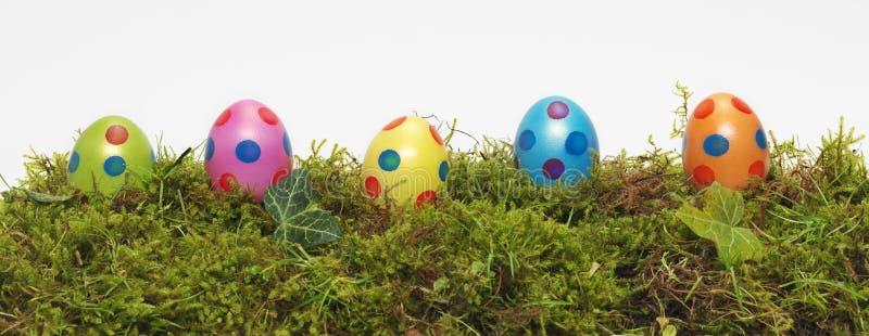 Bandera del panorama de los huevos de Pascua foto de archivo